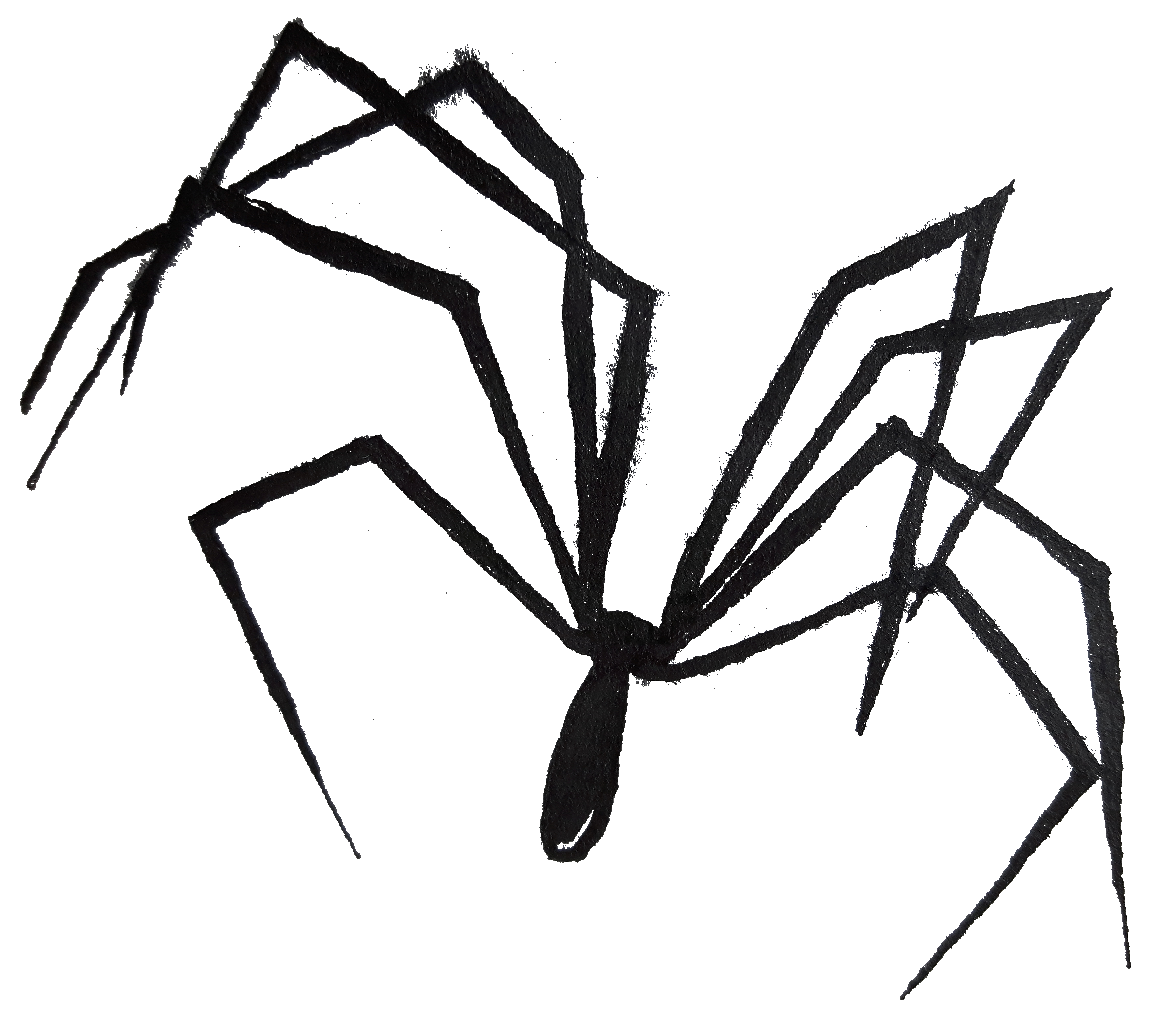 Ink drawing of a cellar spider