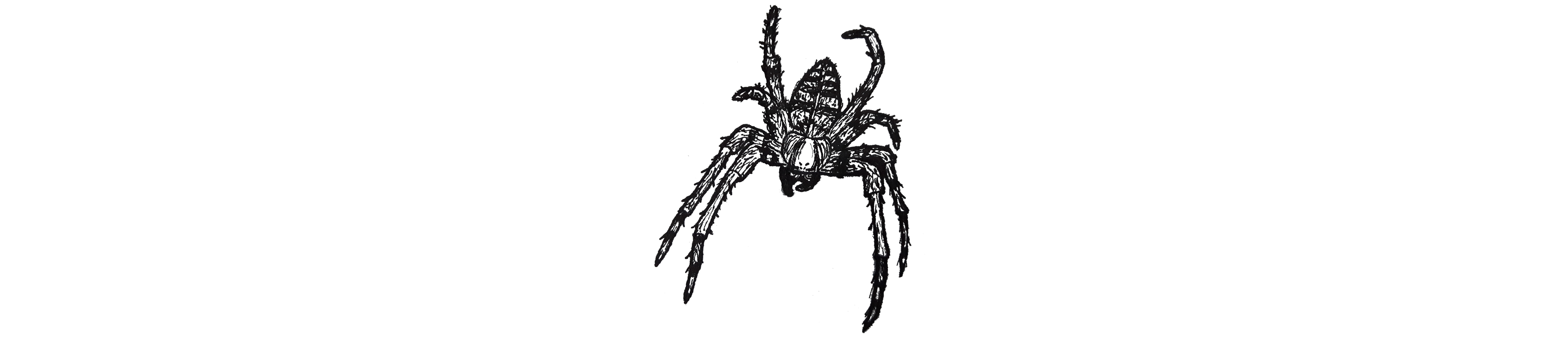 Ink Drawing of a Spider